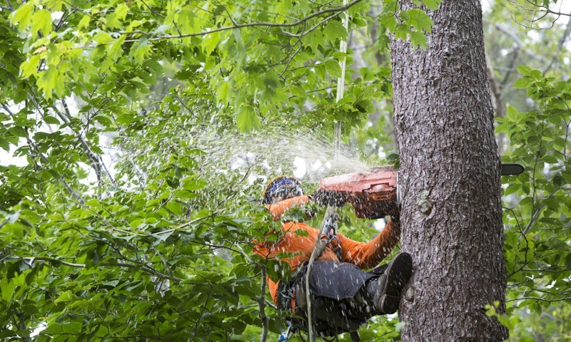 mayer-tree-removal-services-800x480